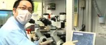 recherches-cellules-iPS
